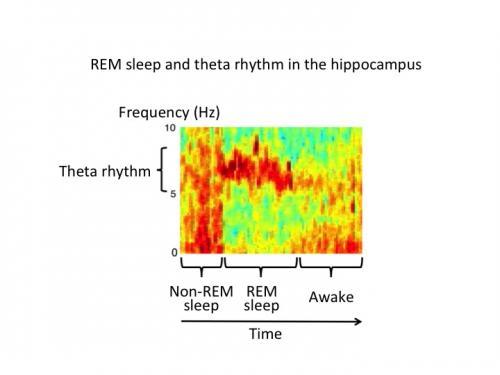 Getting a grip on sleep