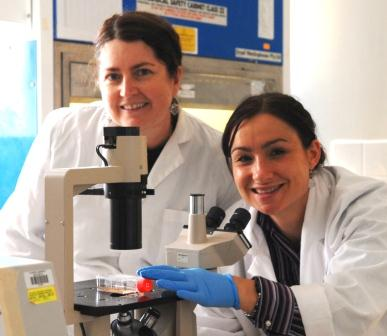Research uncovers a potential role of two proteins in diabetes