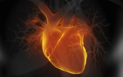 Getting to the heart of genetic cardiac defects