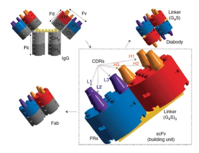 Antibody engineering know-how