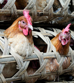 Study reveals new details about H7N9 influenza infections that suddenly appeared in China
