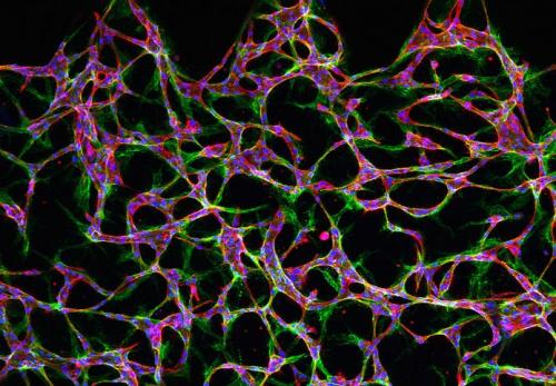 Tiny tools help advance medical discoveries: Researchers are designing tools to analyze cells at the microscale