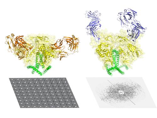 Scientists capture most detailed picture yet of key AIDS protein