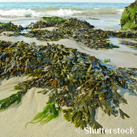 Analysing the benefits of seaweed for SMEs