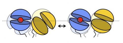 A 'rocking' receptor: Crucial brain-signaling molecule requires coordinated motion to turn on