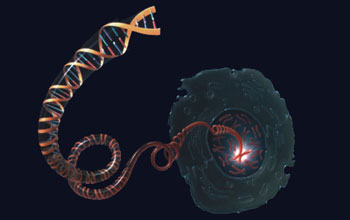 Bacterial DNA may integrate into human genome more readily in tumor tissue