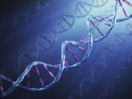 Chronic pain alters DNA marking in the brain
