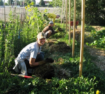 Community gardens may produce more than vegetables
