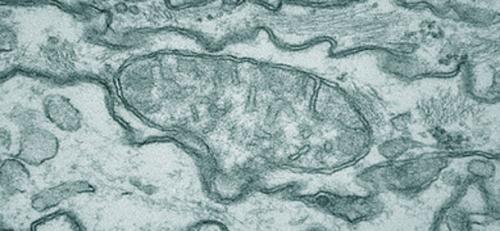 Controlling mood through the motions of mitochondria