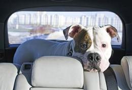 Driving with the dog not a good idea for seniors