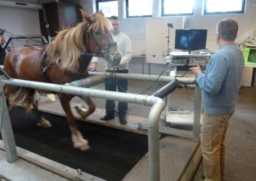 Dynamic disorders of the upper respiratory tract in warm-blooded and cold-blooded trotter racehorses