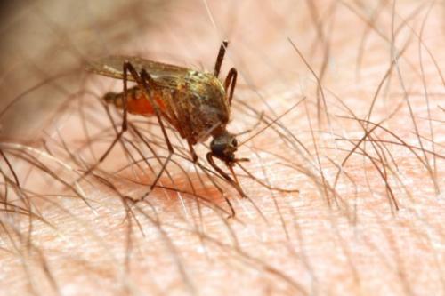 Economics research promotes malaria testing