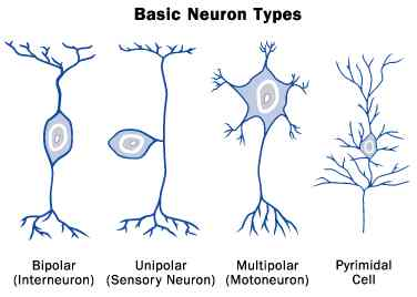How many types of neurons do we need to define?