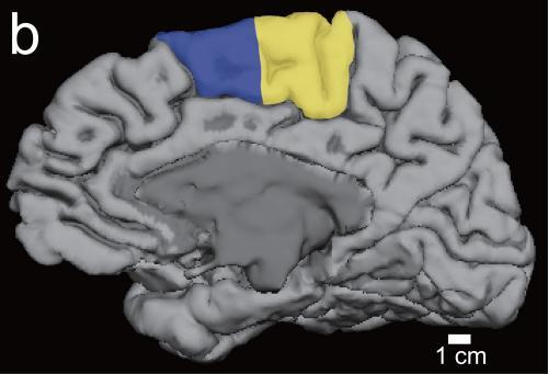 How sleep helps brain learn motor task