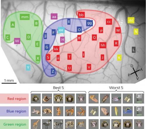Mapping objects in the brain