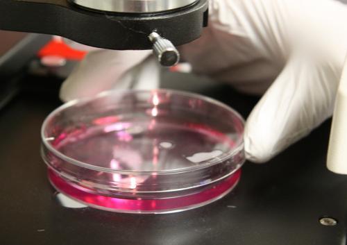 Most clinical studies on vitamins flawed by poor methodology