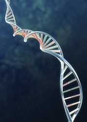 New discovery shows genetic causes of rare bone condition
