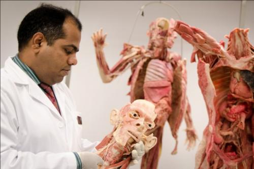 Plastic realistic: Medical students to use plastinated human bodies for anatomy learning