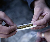 Pot use-low IQ link challenged in study