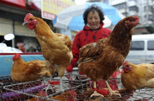 Questions in China on how H7N9 flu strain killed 2