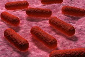 Rare salmonellosis strain detected