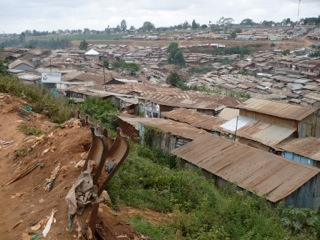 Rodents provide clues as to causes of human illness in African slums