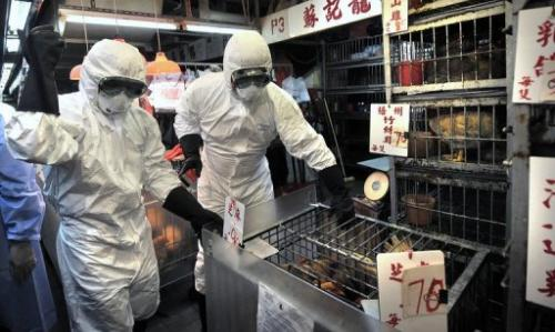 Staff cull chickens in a Hong Kong market on June 7, 2008, after the deadly H5N1 bird flu virus was found