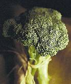 Steaming broccoli preserves potential power to fight cancer: study
