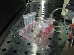 Step toward a bioartificial liver device: A microreactor for hepatocyte cultures