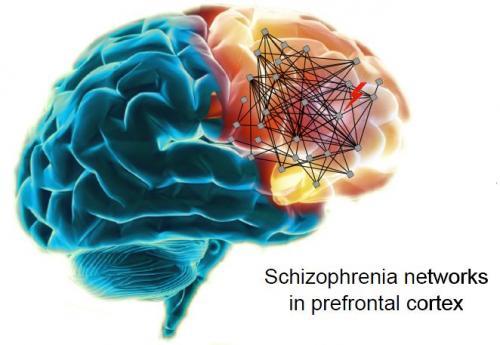 Stray prenatal gene network suspected in schizophrenia