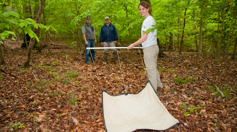 Student researchers track emerging tick-borne disease