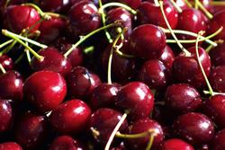 Tart cherries linked to reduced risk of stroke