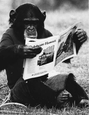 Study shows humans and apes learn language differently