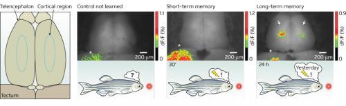Visualizing a memory trace