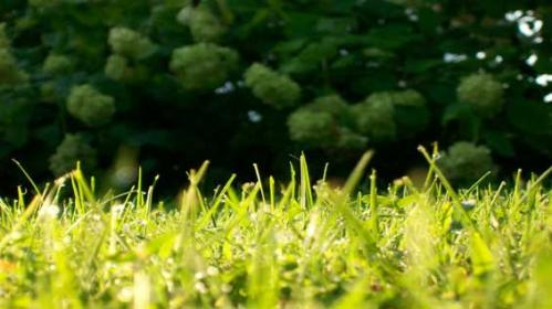 Women in lower green space areas show higher overall levels of stress, new research shows