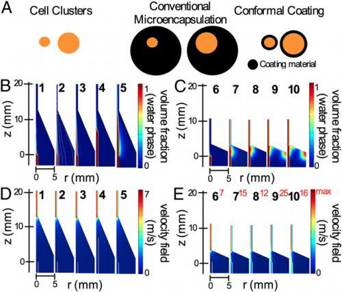 Computational model of the conformal coating procedure