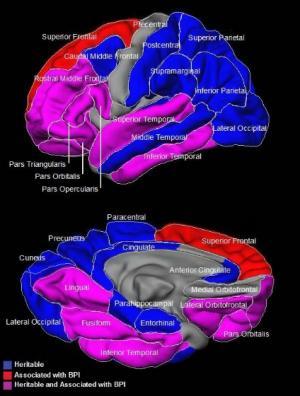 Understanding the basic biology of bipolar disorder