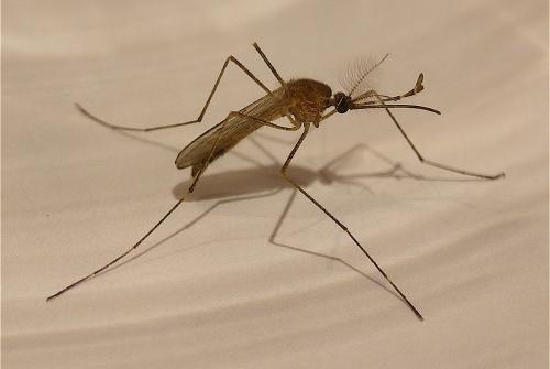 Scientists find new way to fight Malaria drug resistance