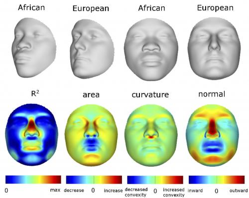 3-D model links facial features and DNA