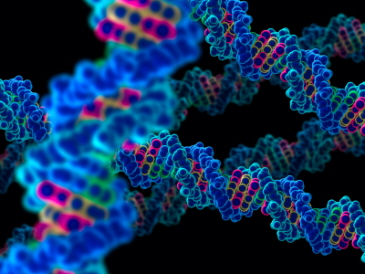 Scientists identify 'long distance scanner' for DNA damage