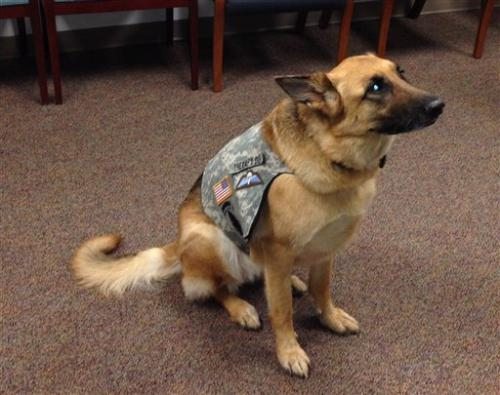 Therapy dog helps US troops deal with stress