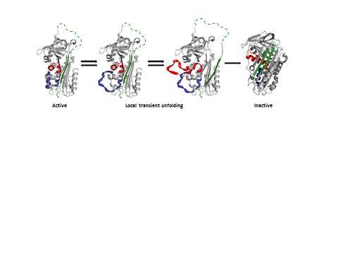 Breakthrough in understanding of important blood protein