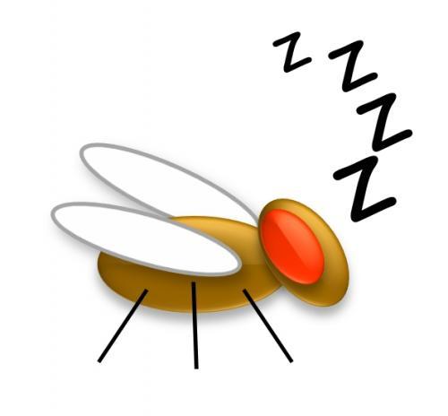 Penn researchers find link between sleep and immune function in fruit flies