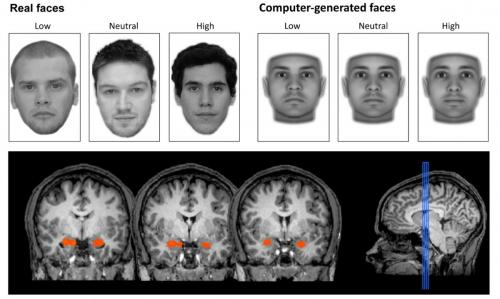 Our brains judge a face's trustworthiness -- even when we can't see it