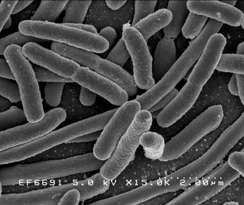A first: Scientists show bacteria can evolve a biological timer to survive antibiotics