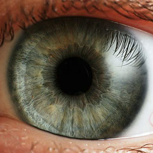 Blood vessel research offers insights into new treatments for eye diseases