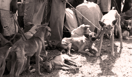 Canine vaccinations effective deterrent to rabies in Africa