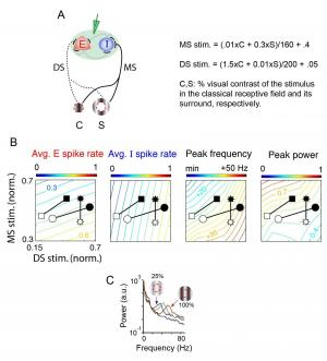 Contrast dependence of gamma in visual cortex in model and experiments