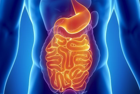 Design of new foods should focus particularly on healthy gastro-intestinal tract