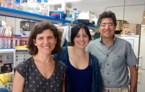 Researchers describe JNK protein's key role in tissue regeneration